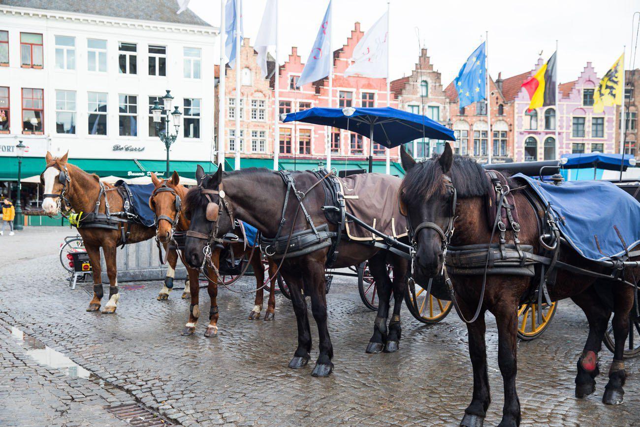 Horses in Bruges