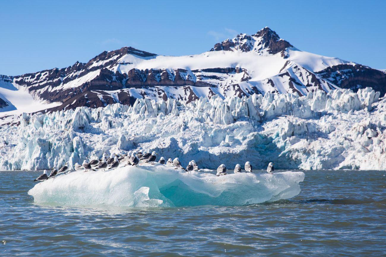 Iceberg Birds