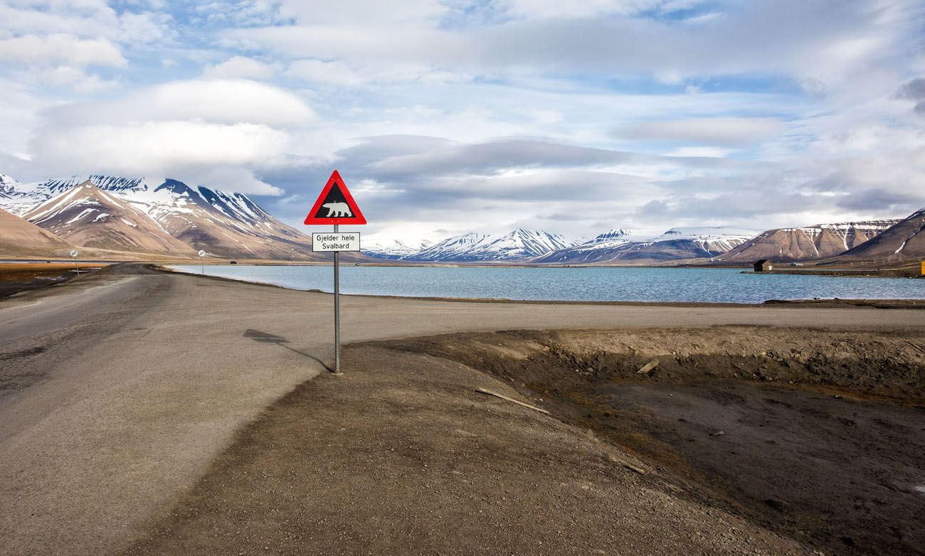 Svalbard Polar Bear Sign