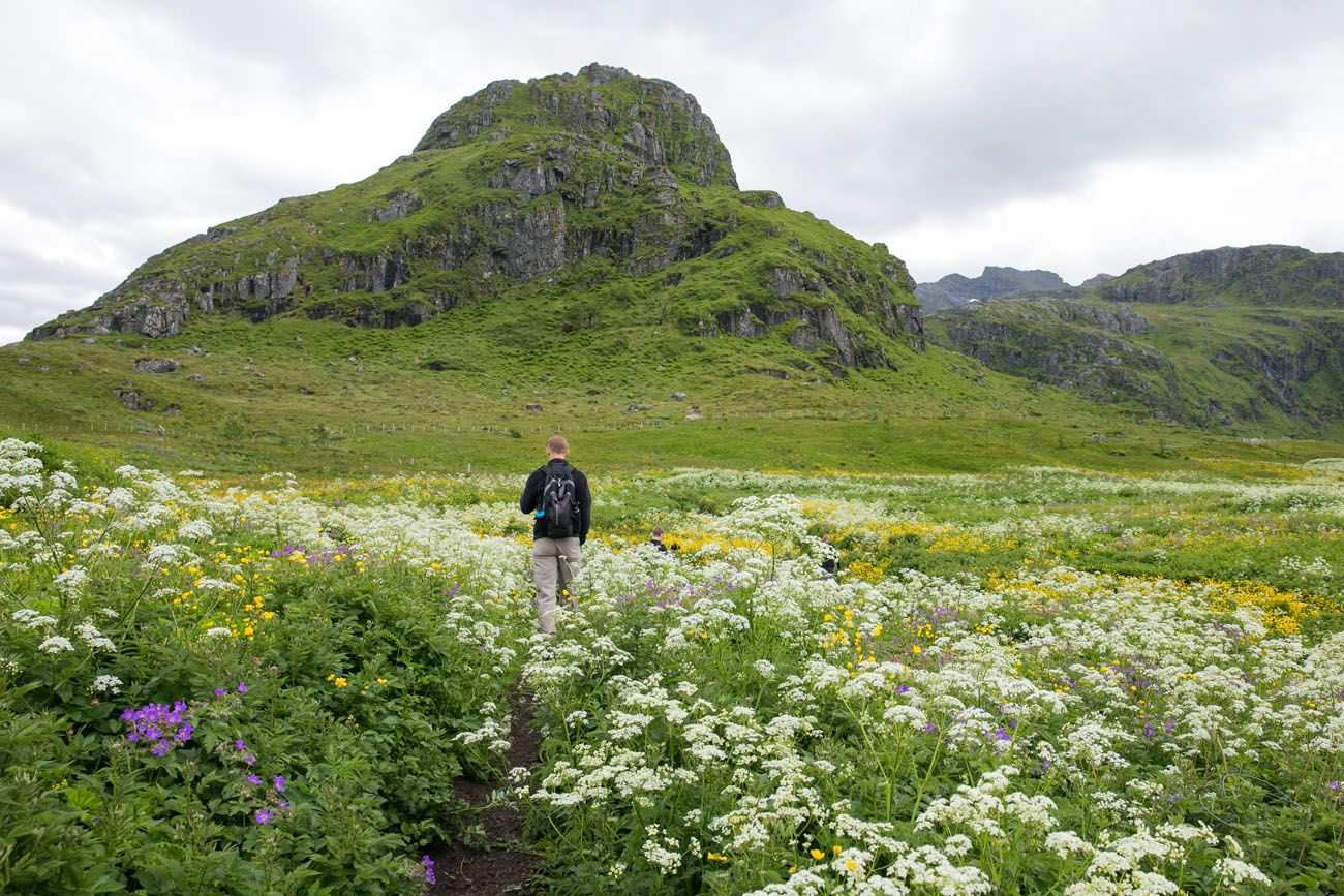 Lofoten Wildflowers