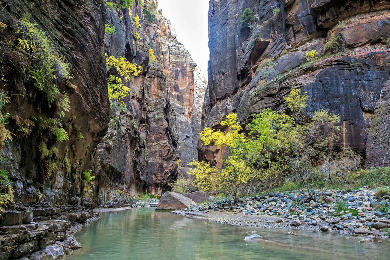 The Zion Narrows in October