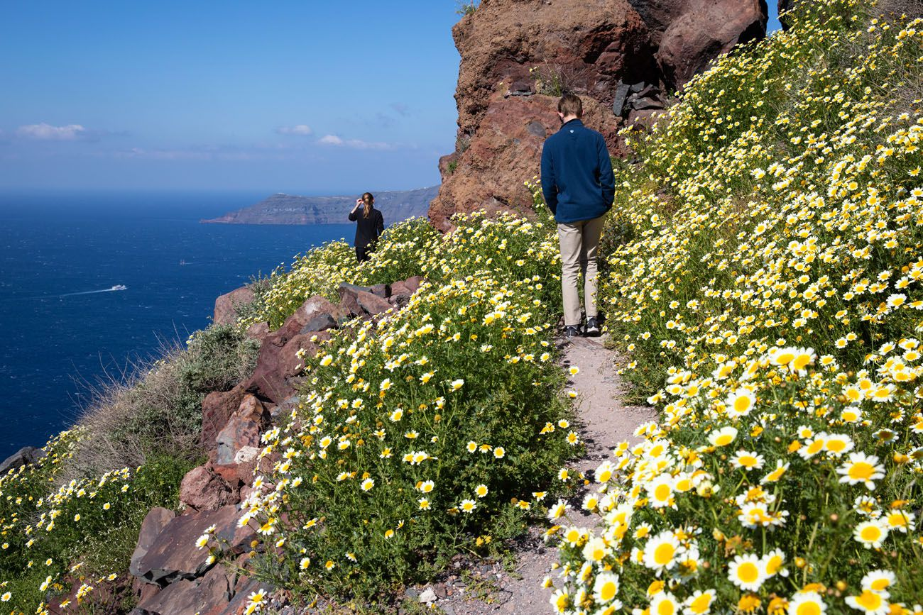 Wildflowers on Skaros Rock