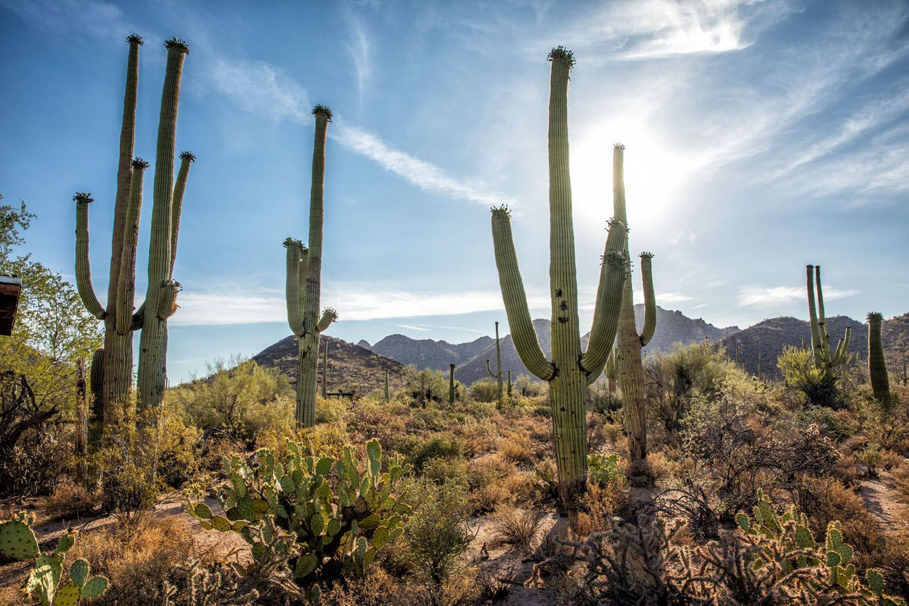 Best Things to do in Saguaro
