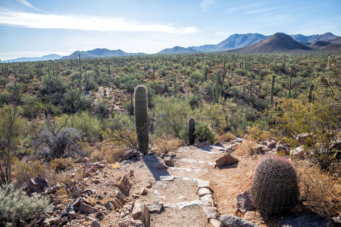 Hike Saguaro