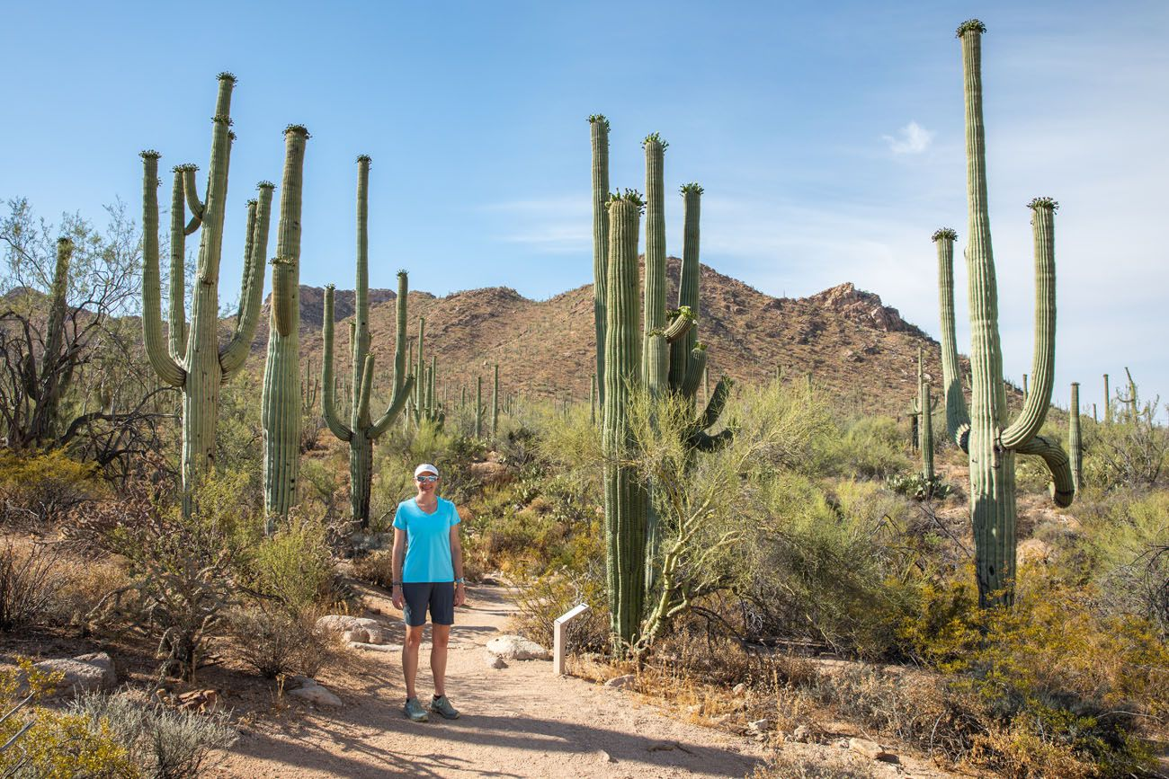 Julie in Saguaro