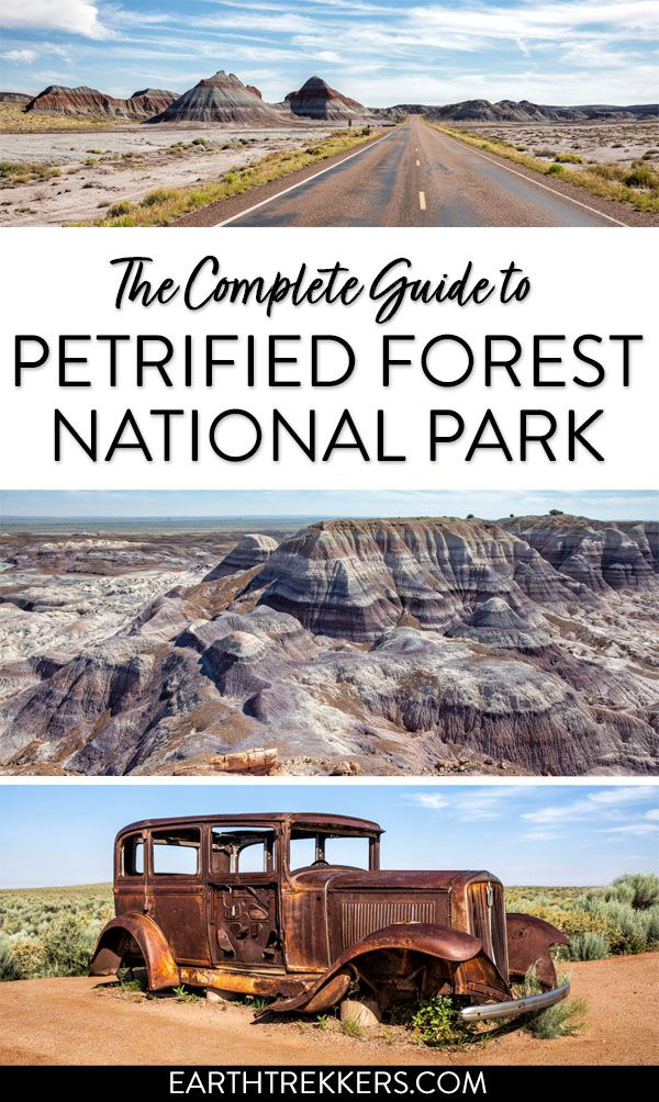 Petrified Forest Travel Guide