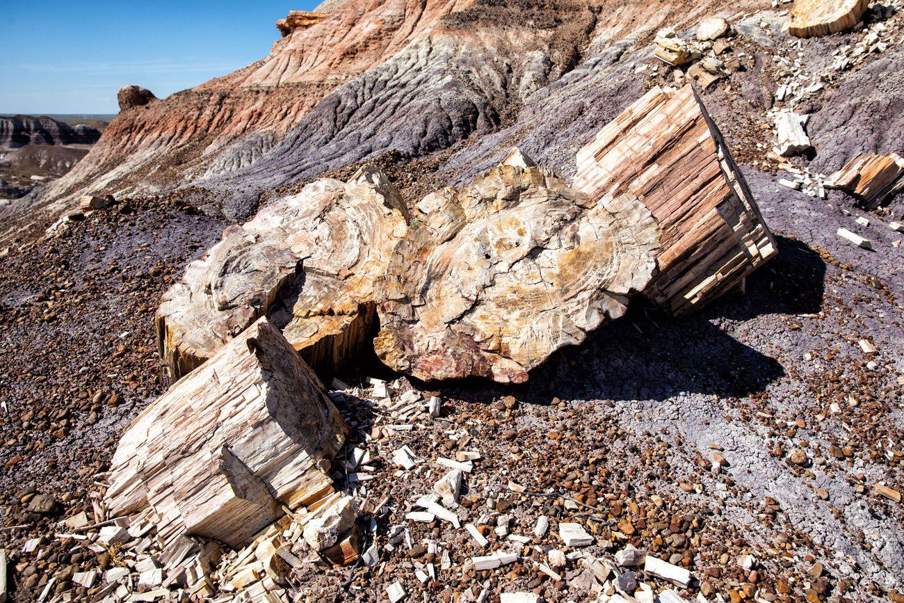 Petrified Wood Arizona