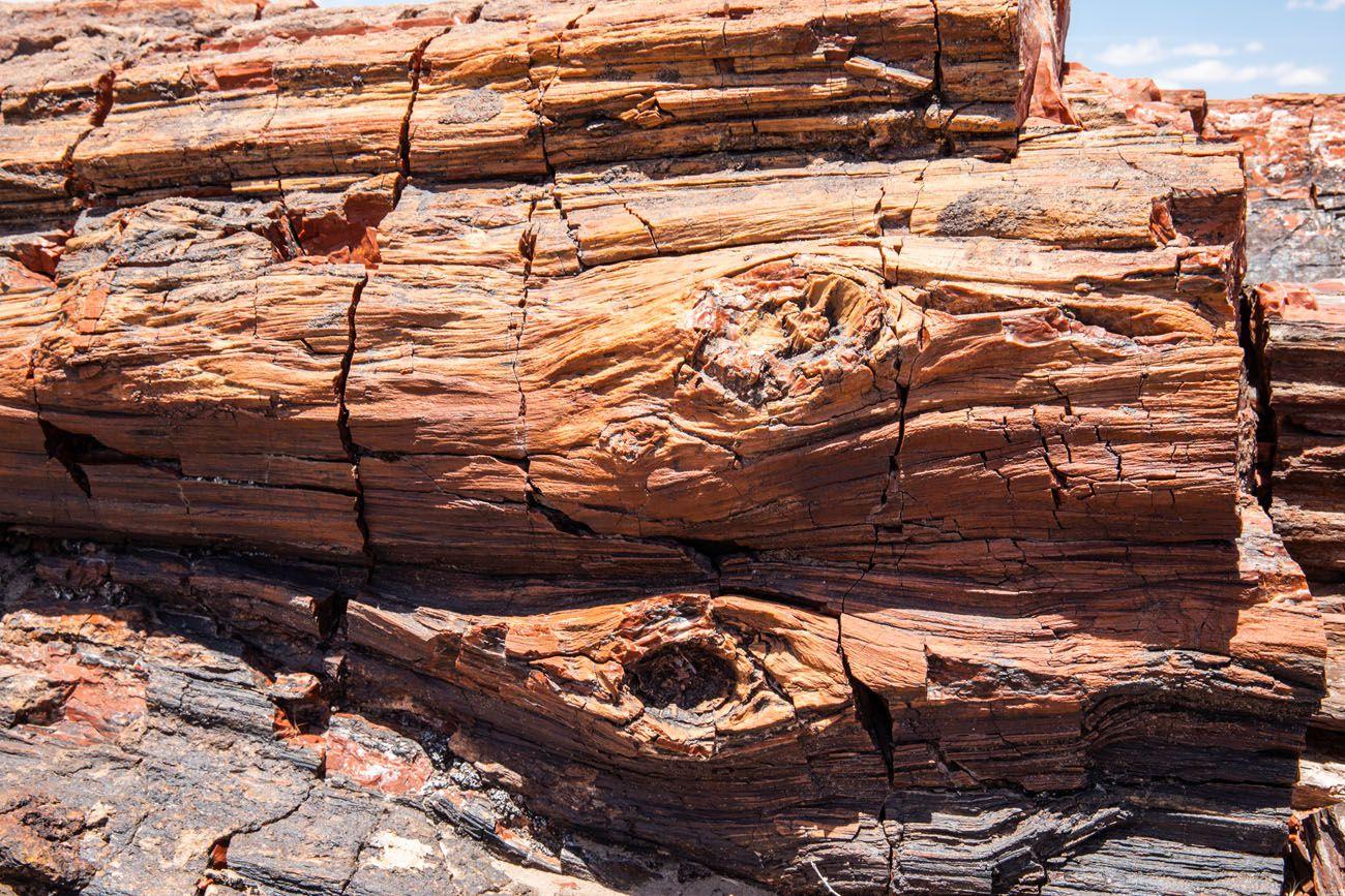Petrified Wood Photo