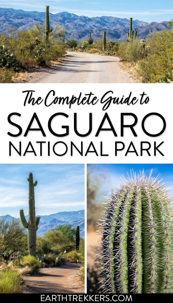 Saguaro National Park Guide