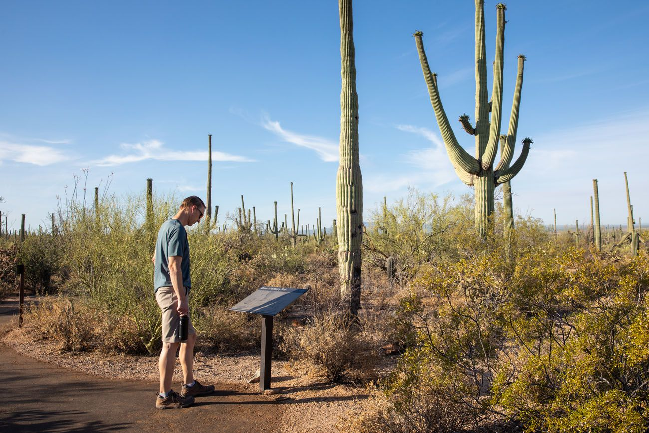 Tim in Saguaro