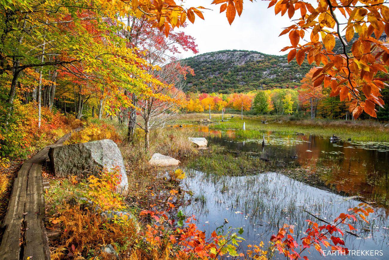 Acadia Fall Colors