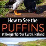 Iceland Puffins at Borgarfjörður Eystri