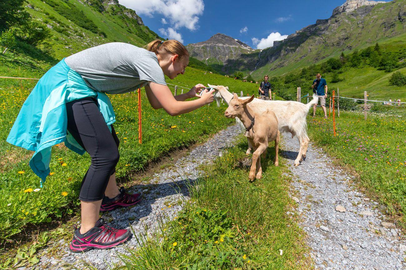 Kara and the Goats