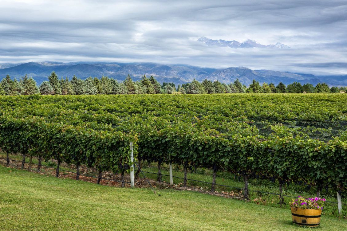 Mendoza Wine Region