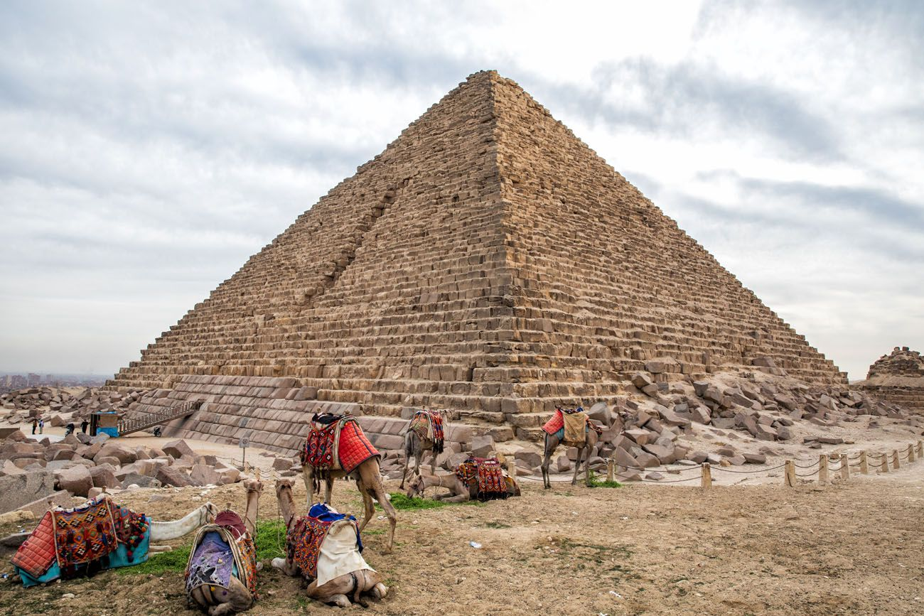 Camels and Pyramid