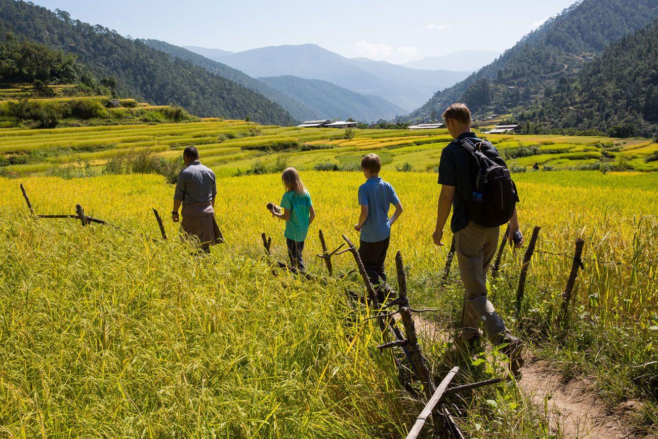 Rice Fields Bhutan
