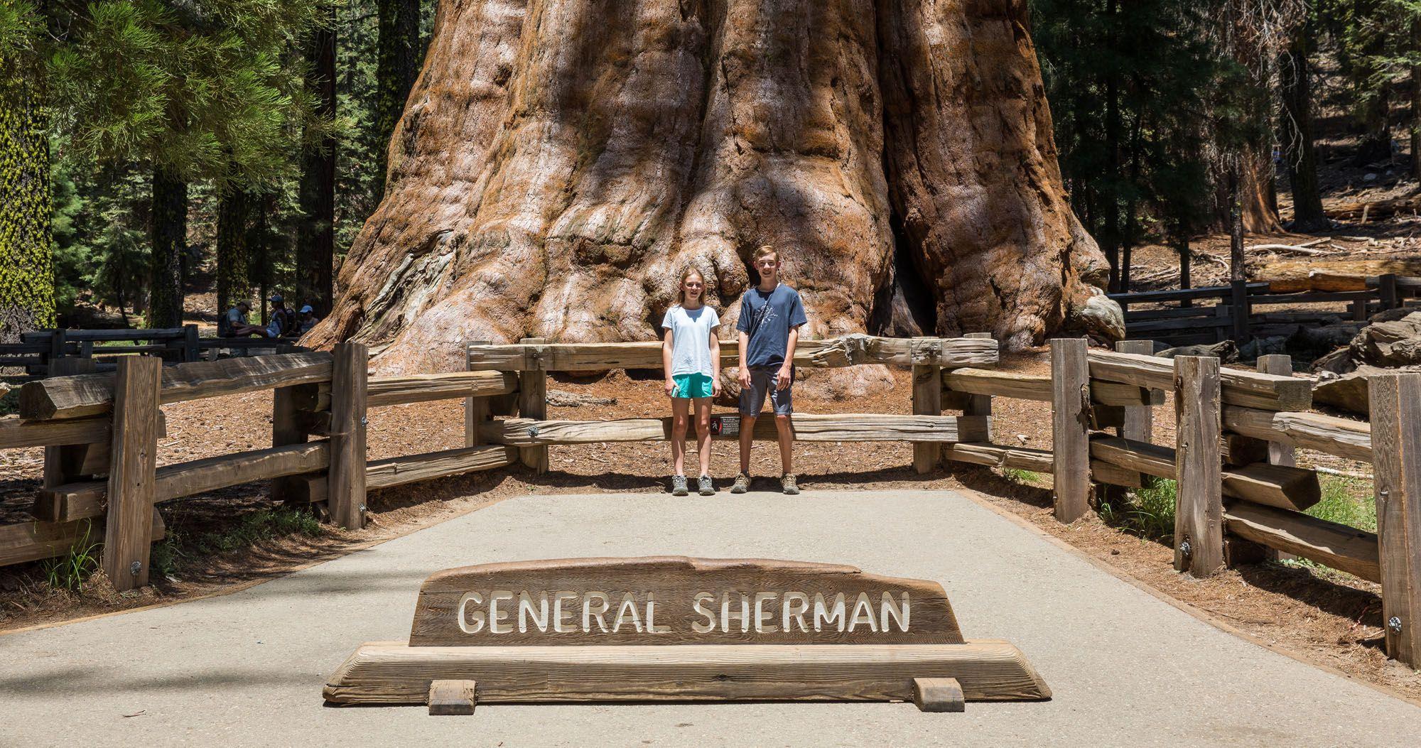 General Sherman Sequoia