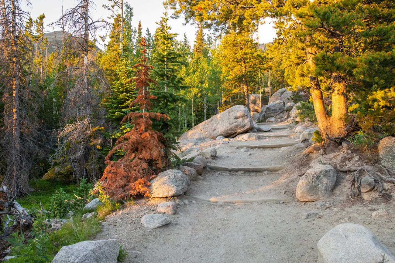 Trail to Alberta Falls