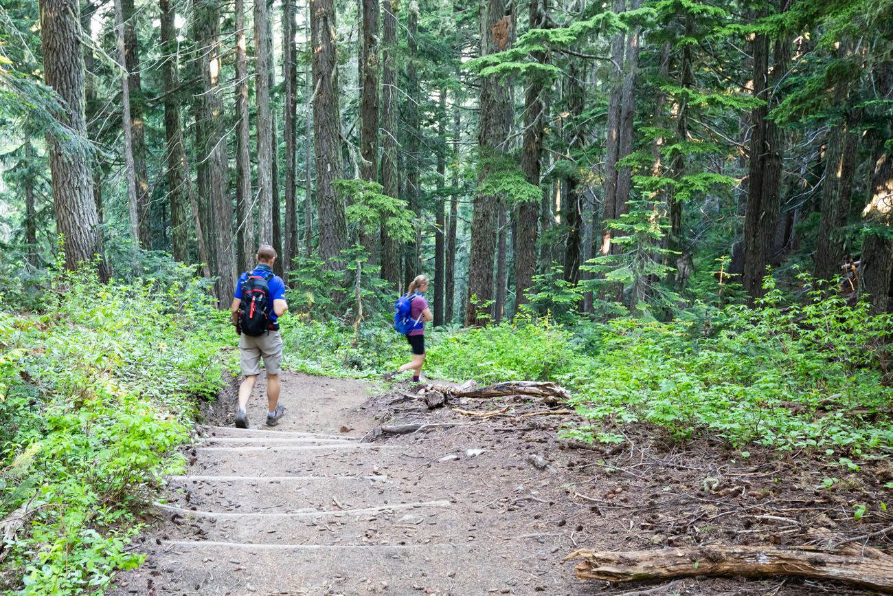 Tolmie Peak Forest Trail