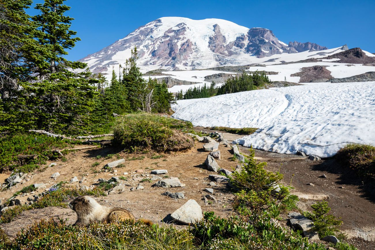 Marmot Mt Rainier