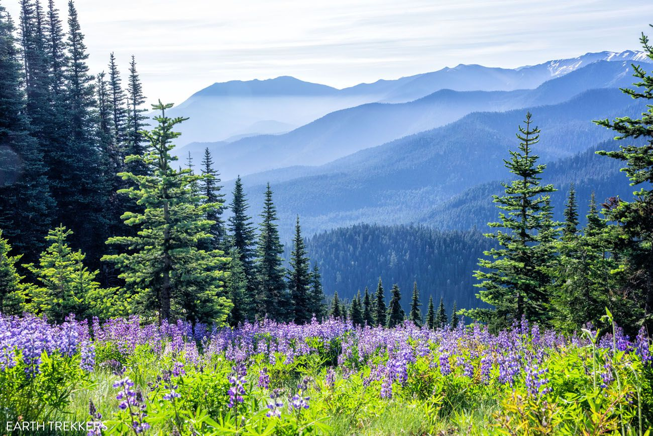 Olympic National Park in July
