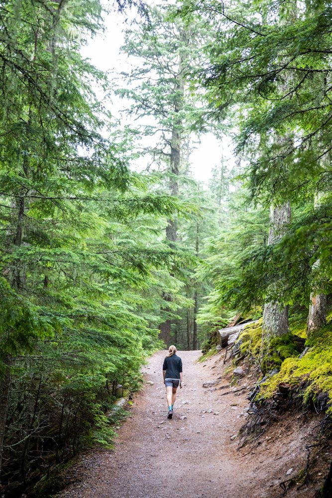 Hike in Glacier national parks with kids