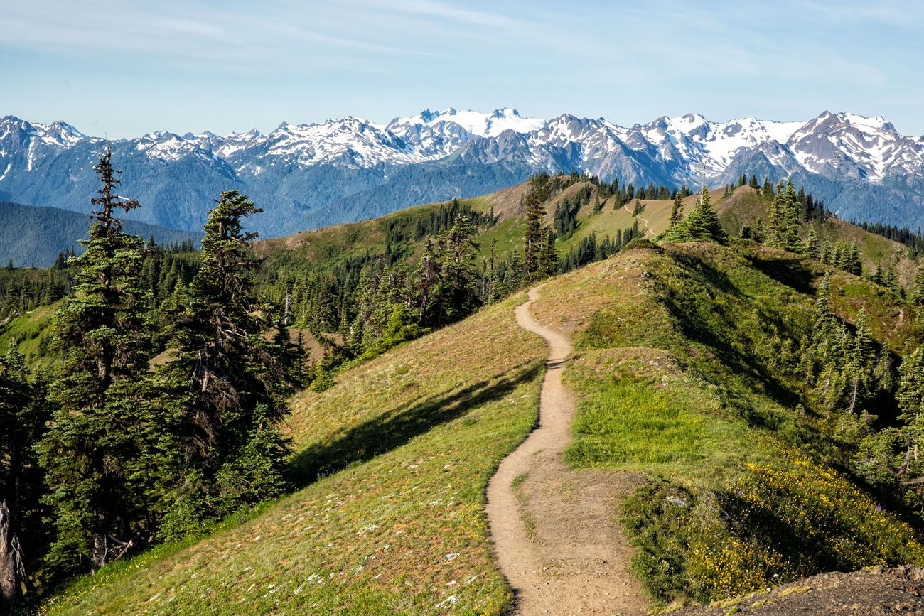 Hurricane Ridge Trail hikes in the national parks