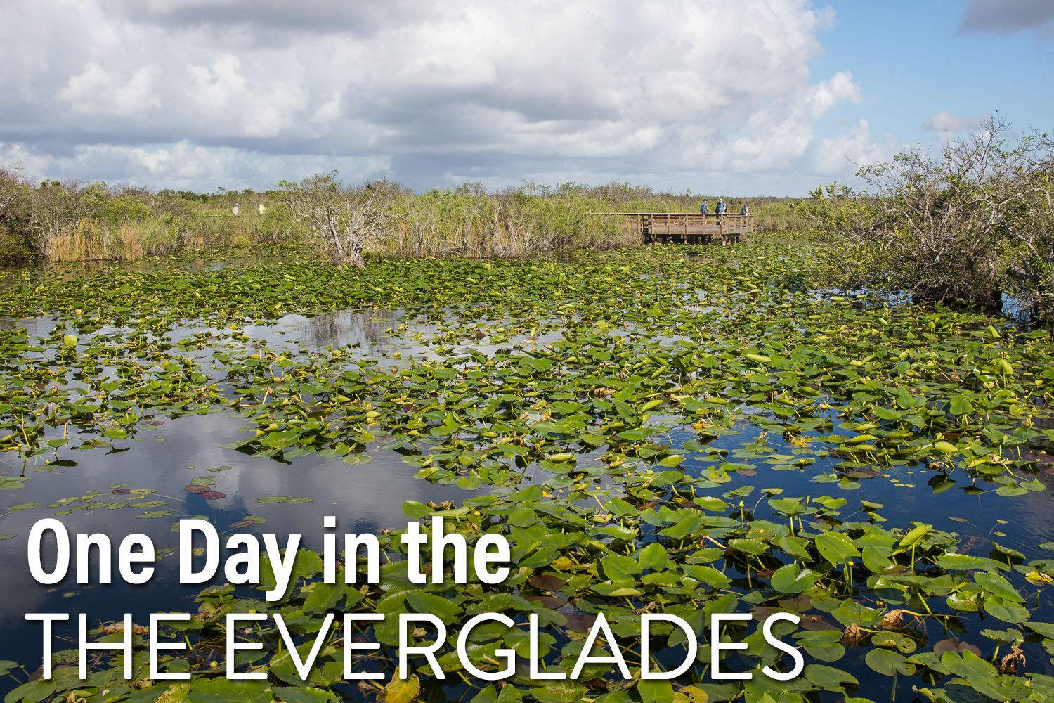 One Day in Everglades