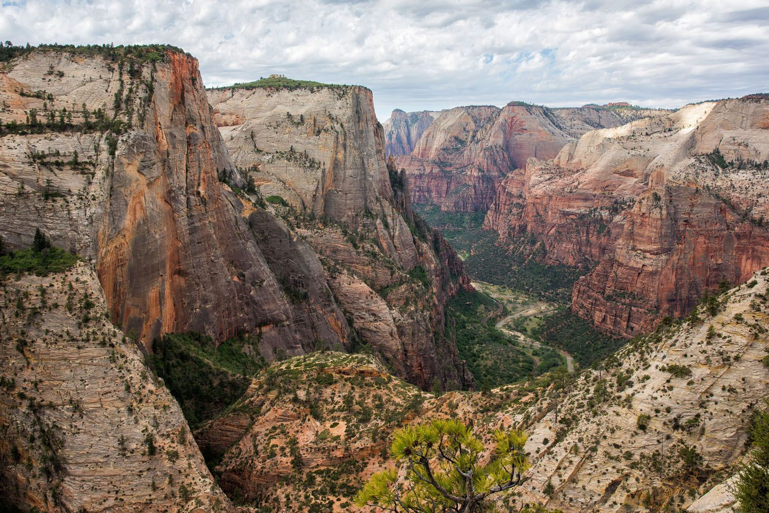 View of Zion Observation Point Hike