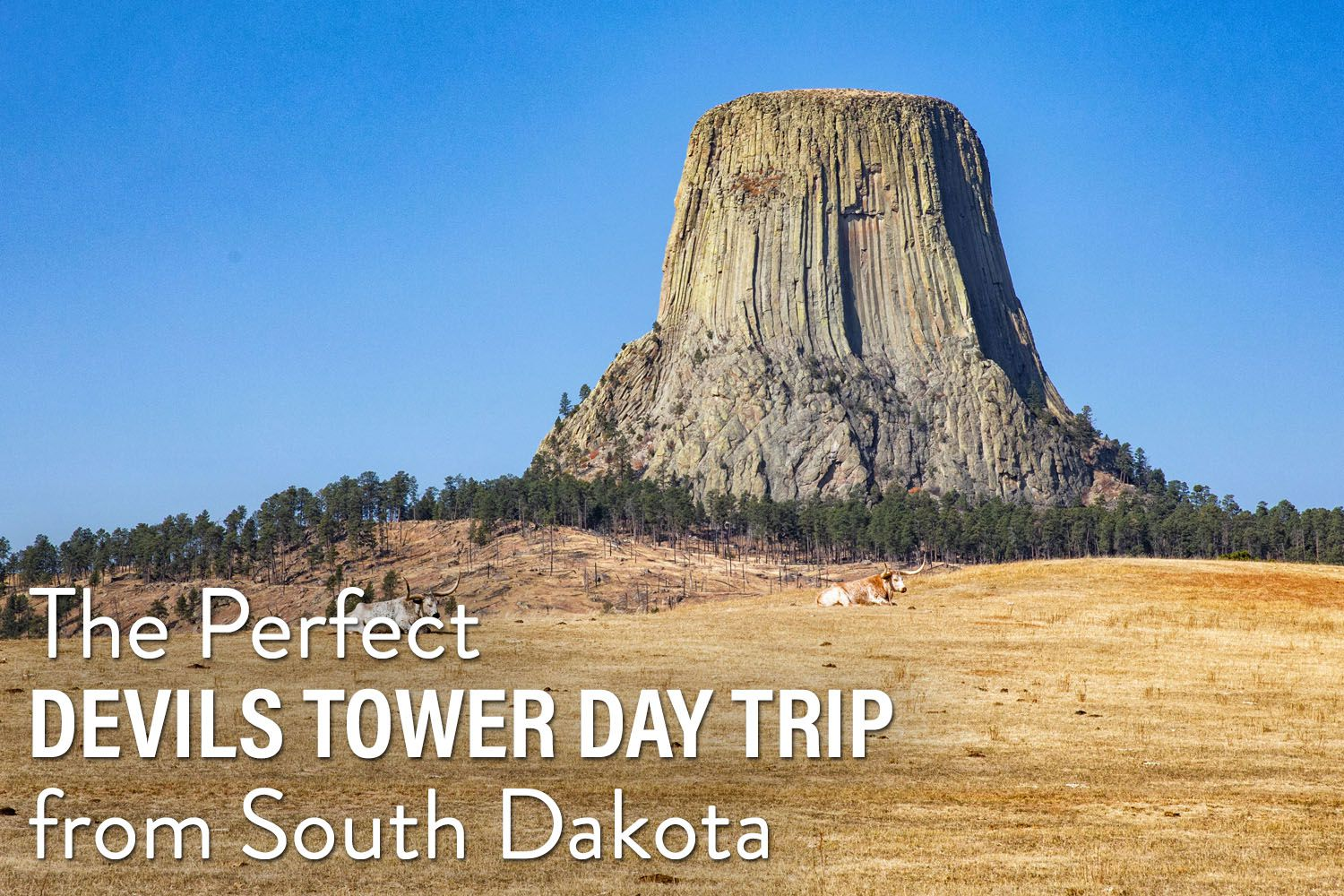 Devils Tower Day Trip