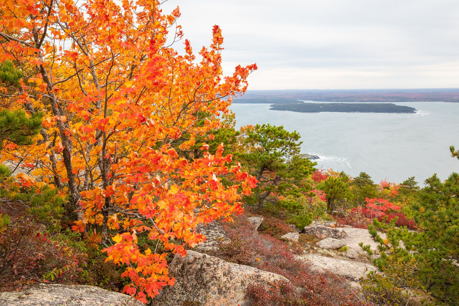 Fall Colors in Acadia
