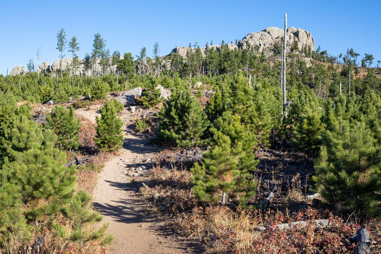 Little Devils Tower Trail best hike in Custer State Park