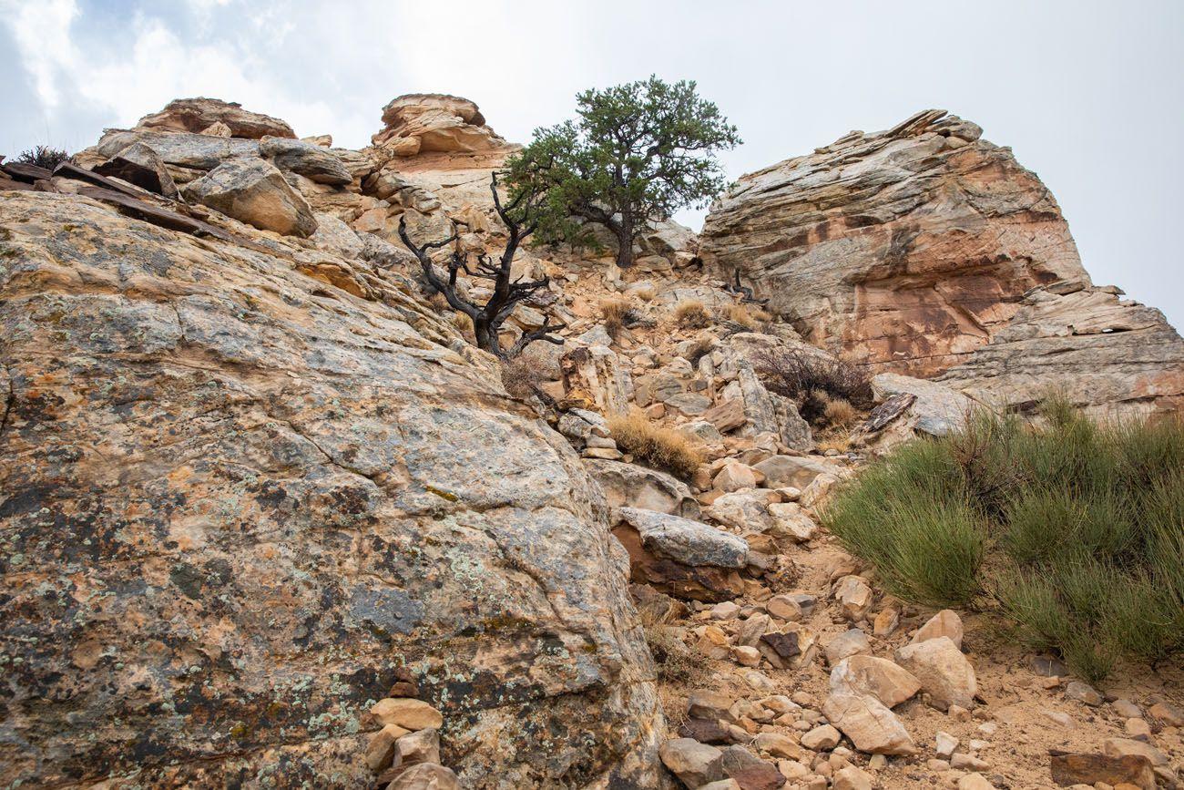Navajo Knobs Rock Scramble