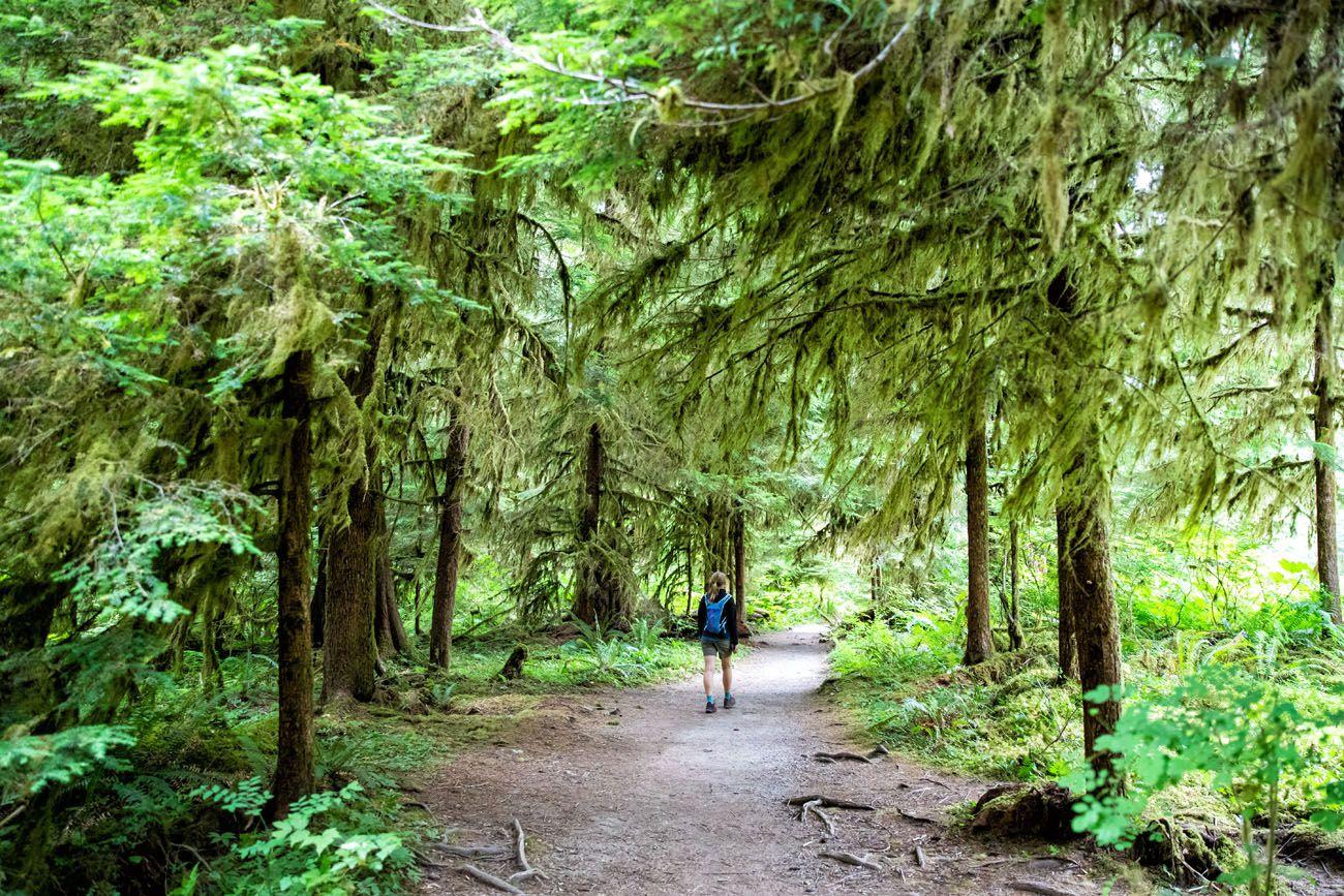 Olympic Rainforest