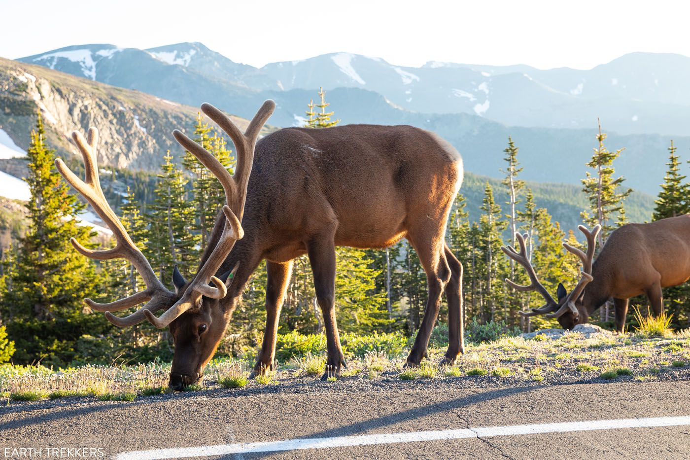 Trail Ridge Road Elk scenic drives in Colorado
