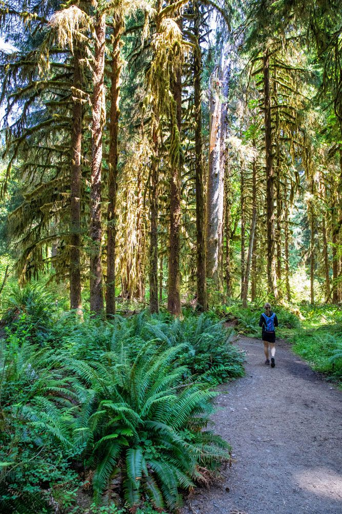 Hall of Mosses things to do in Olympic National Park