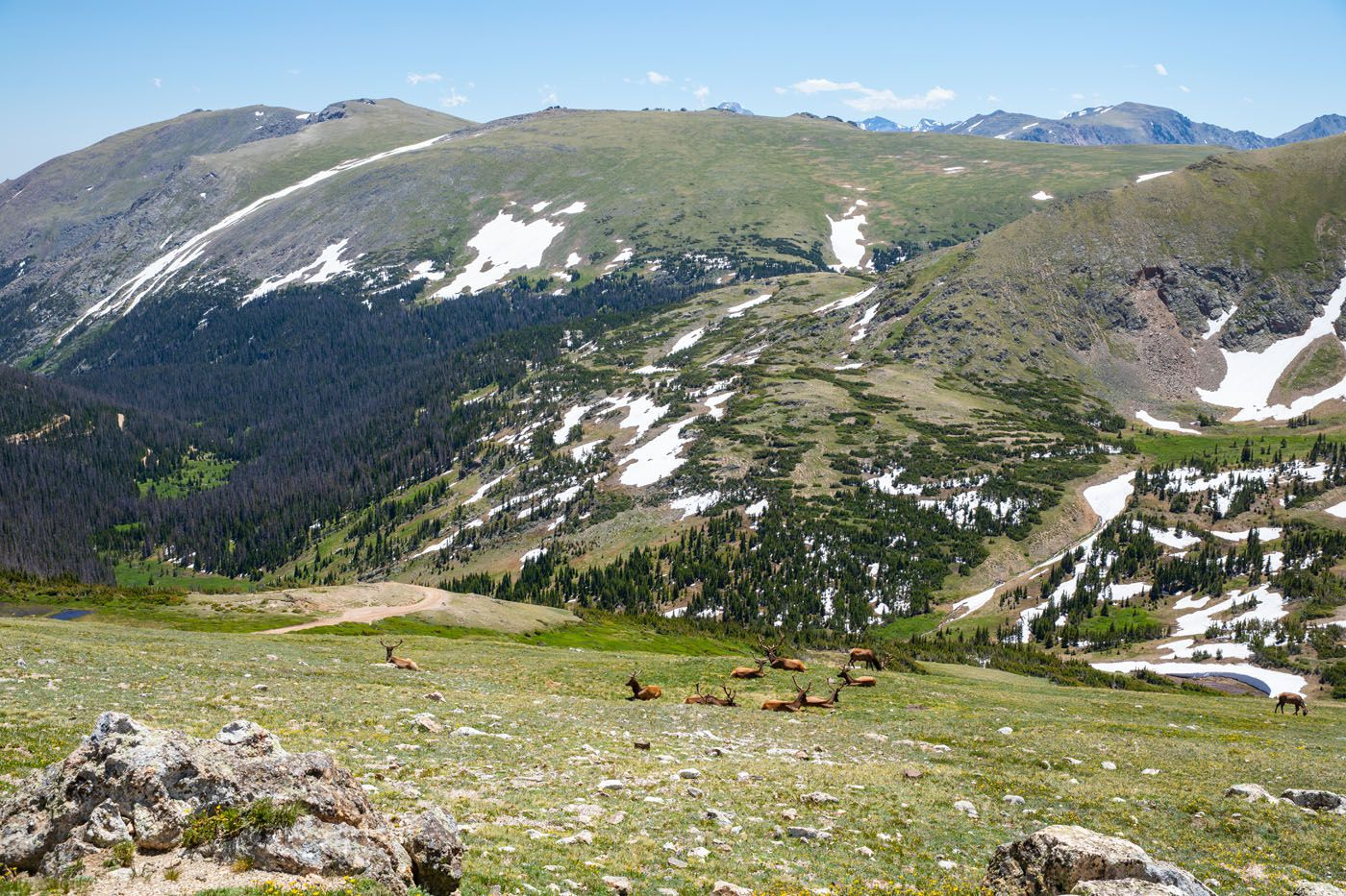 Alpine Ridge Elk one day in Rocky Mountain National Park