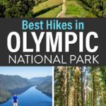 Best Hikes Olympic National Park Guide