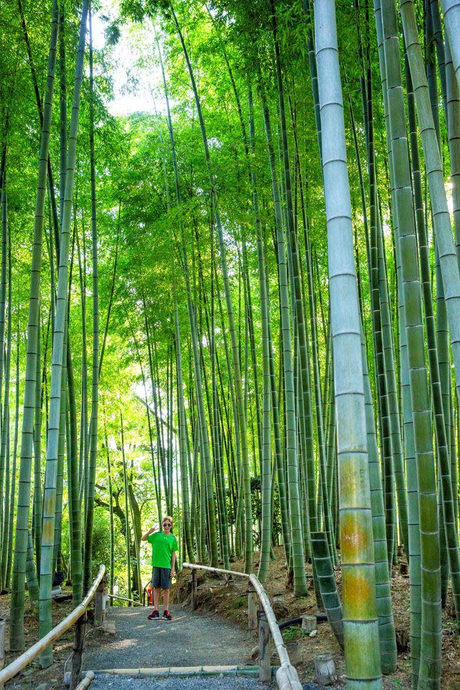 Kodaiji Bamboo Forest