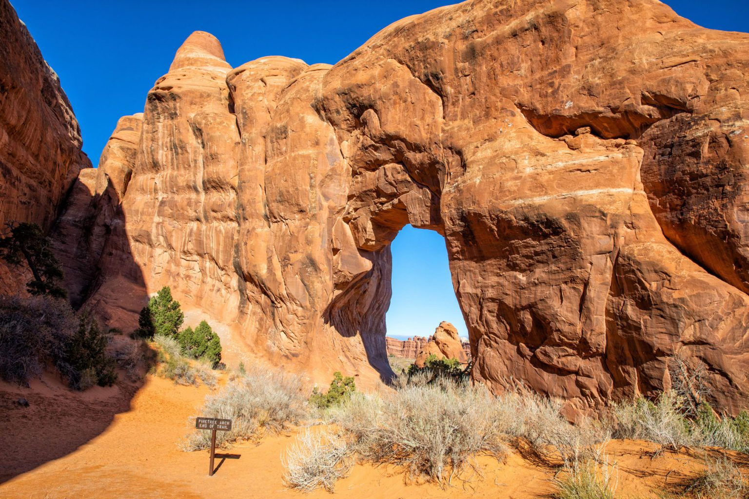 Pinetree Arch
