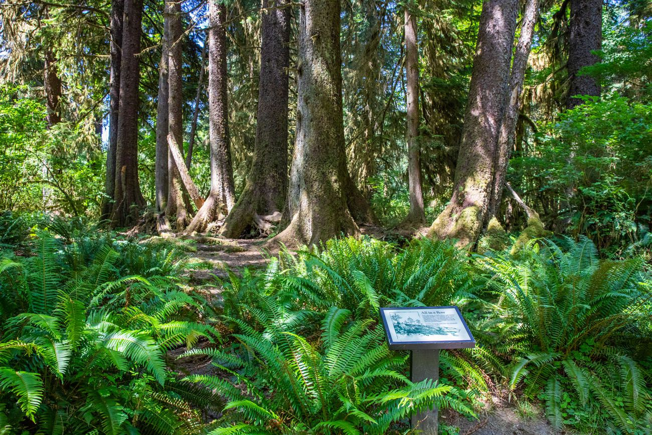 Spruce Nature Trail hikes in Olympic National Park