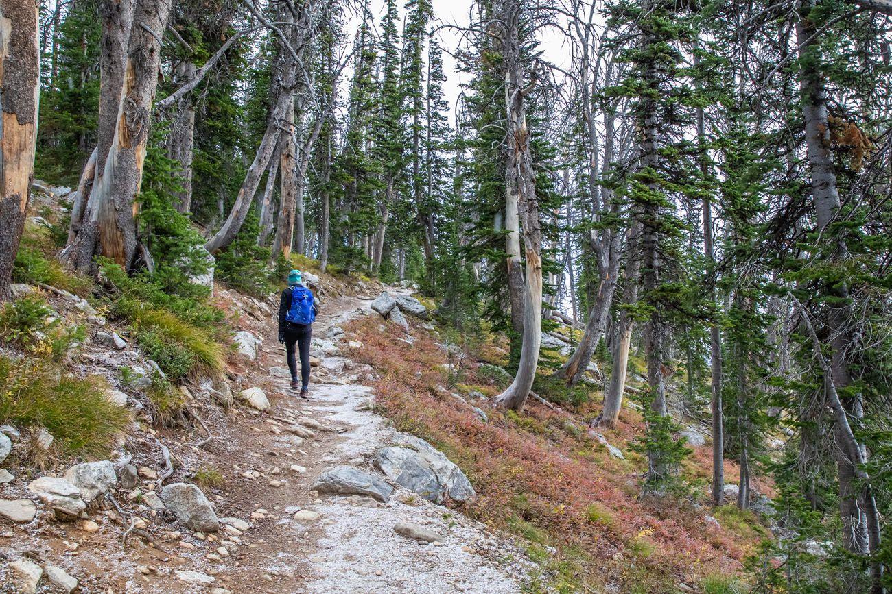 Teton Trail in the Trees