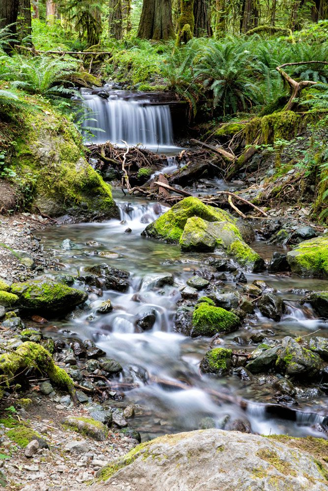 Waterfall hikes in Olympic National Park