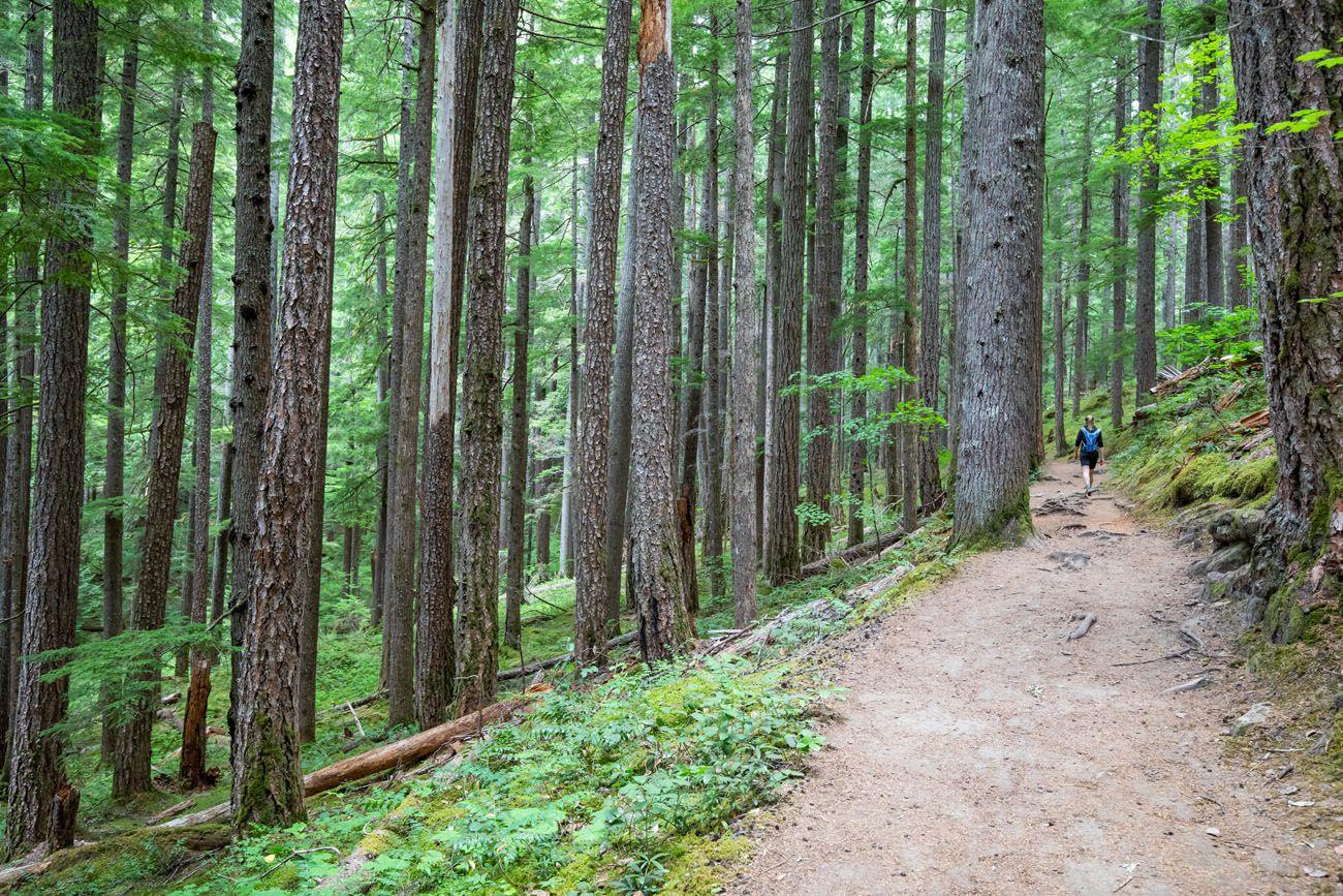 Mount Rainier Forest
