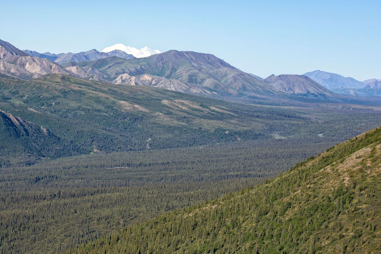 Another Denali View
