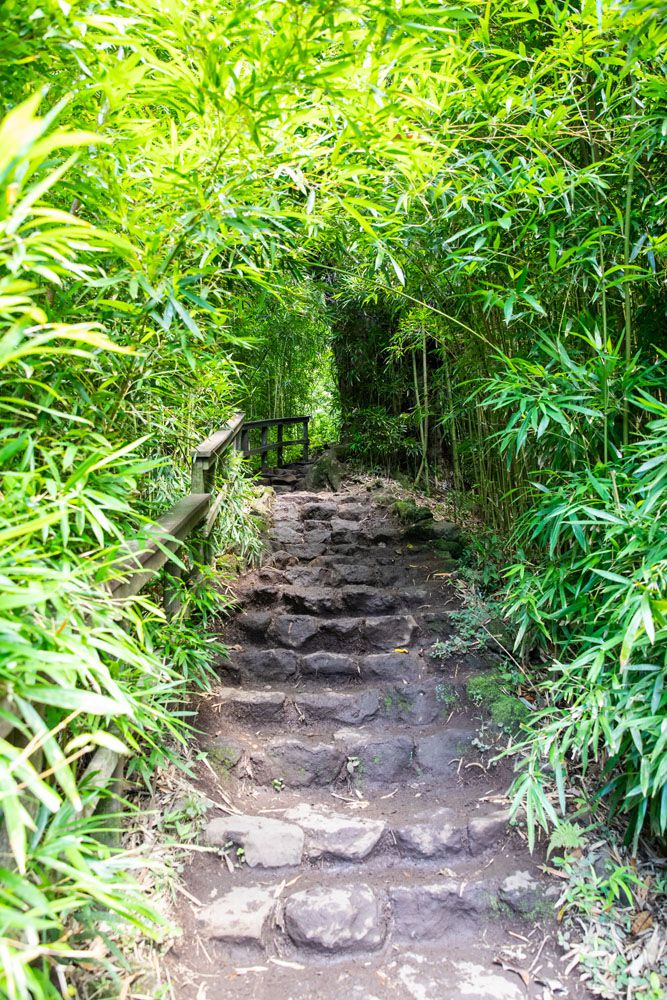Bamboo and Steps