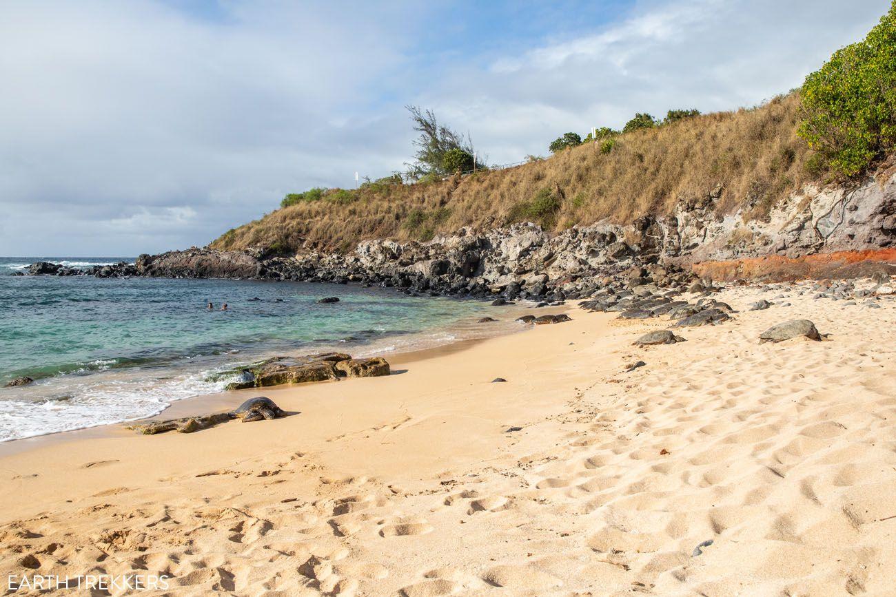 Hookipa Beach Sea Turtles