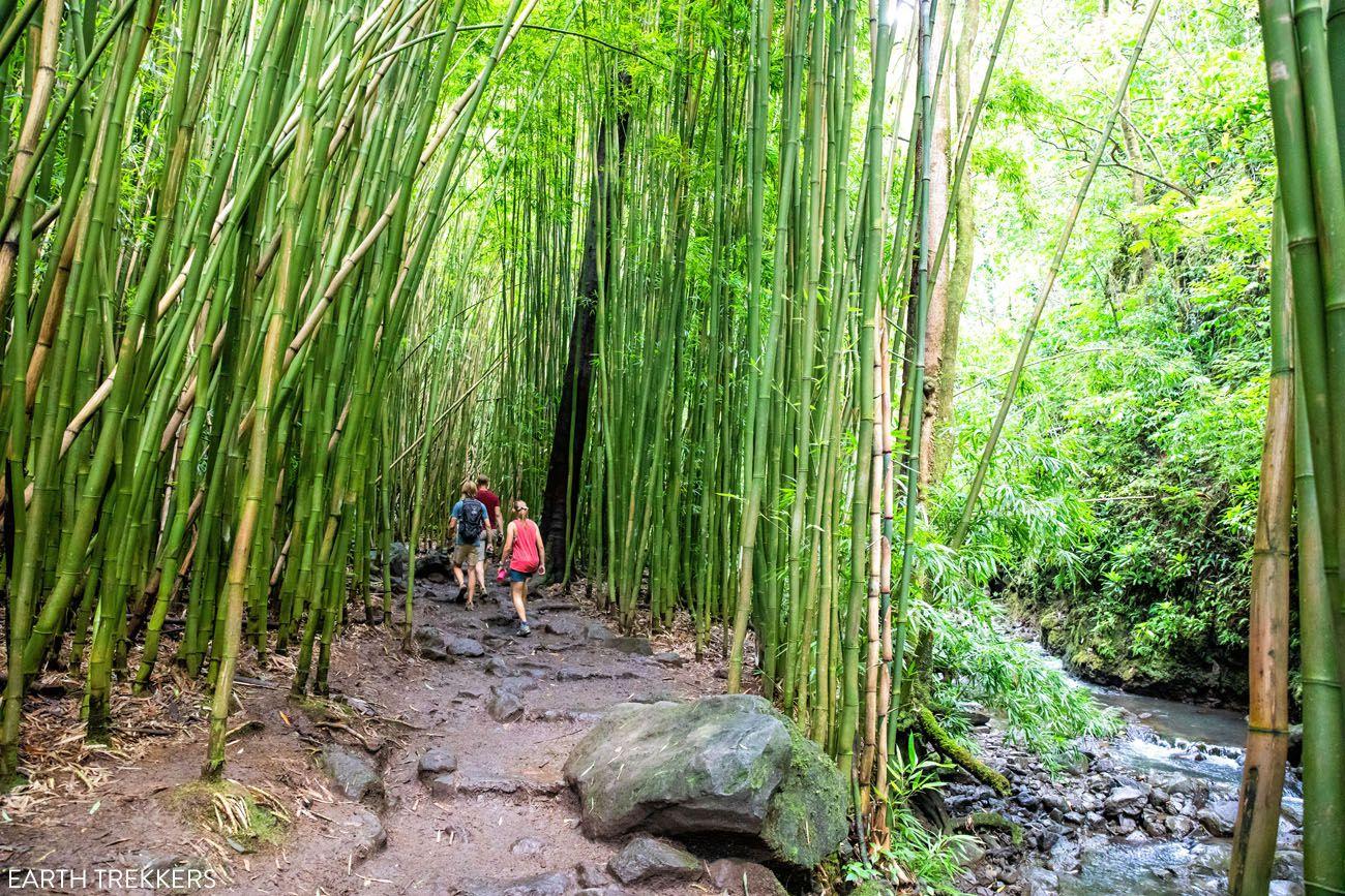How to Hike the Pipiwai Trail
