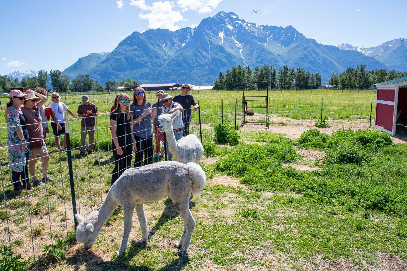 Julie Kara Reindeer Farm