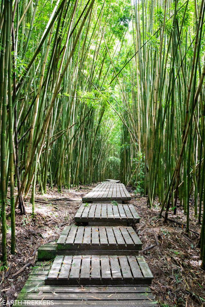 Road to Hana Hike best things to do in Haleakala National Park